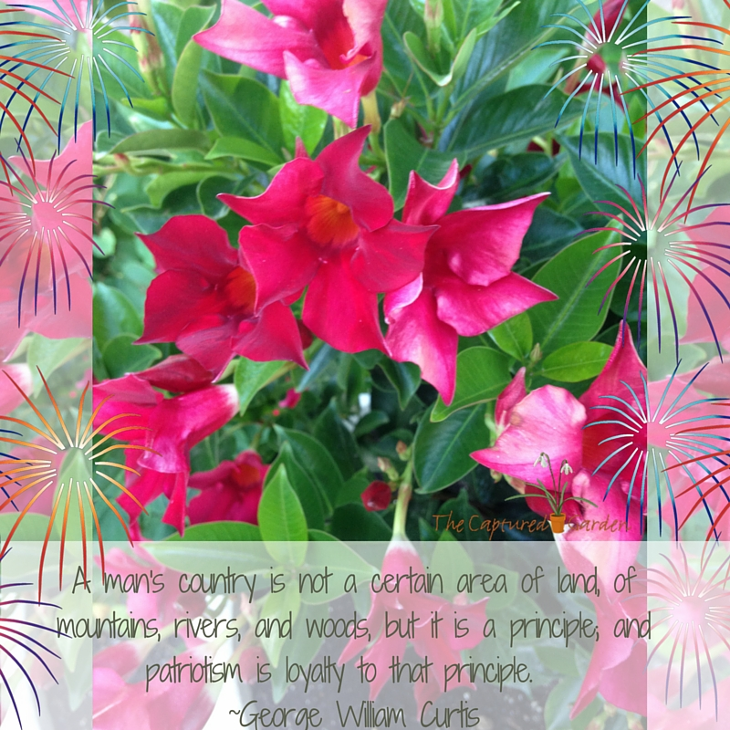 Garden Quote: Patriotisms