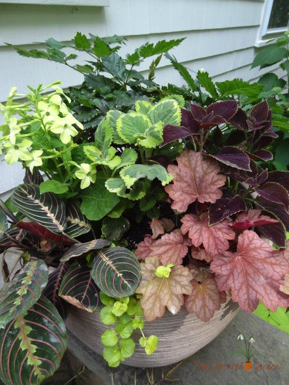 best interesting plant for shade gardens