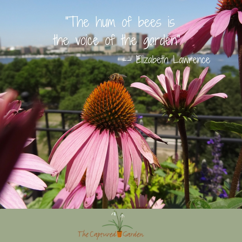 """The hum of bees is the voice of the garden""  -- Elizabeth Lawrence"