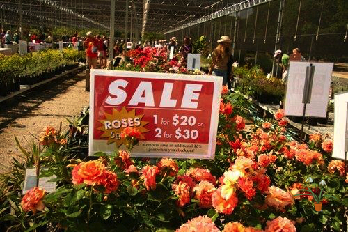 clearance plants for gardens