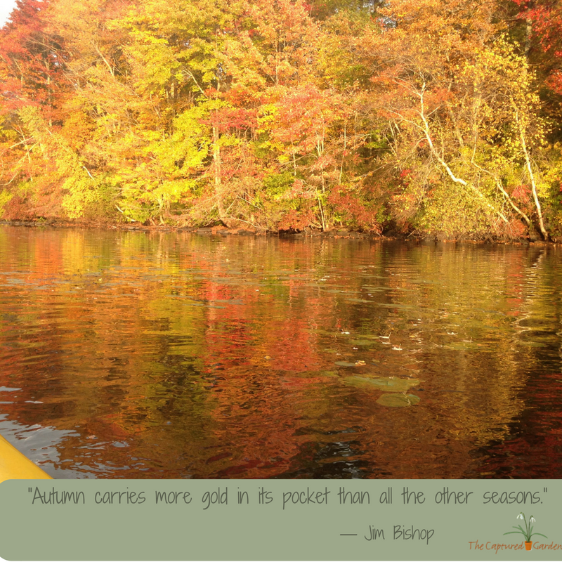 garden quote - autumn gold