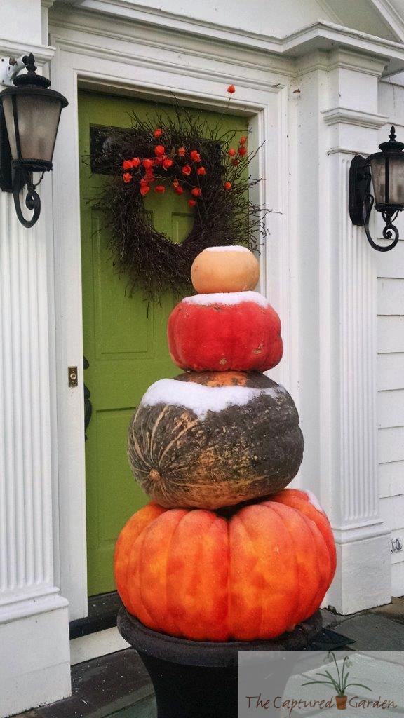 container-garden-pumpkins