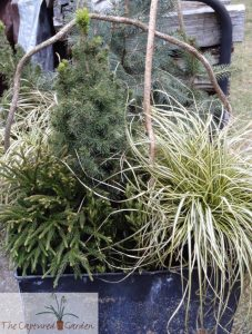 winter greens, containers, gardens