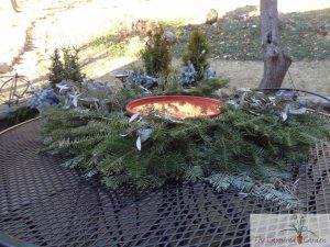 WInter greens, container gardens, wreath design