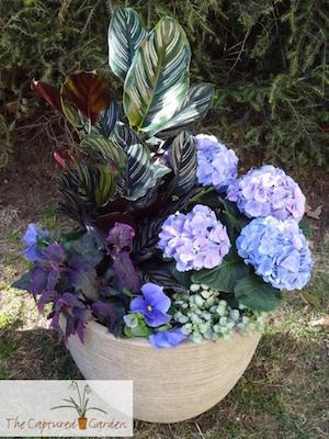 houseplant container garden design services