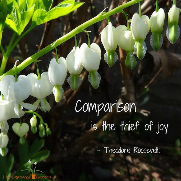 comparison is the theif of joy - theodore roosevelt