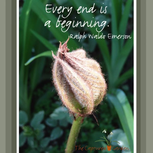 every-end-is-a-new-beginning-emerson-garden-quote