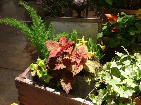galvanized-metal-container-garden-6