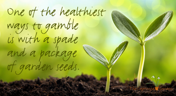 garden quote - healthiest gamble packet of seeds