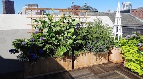 boston-rooftop-garden-design-4c