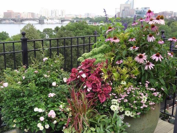 container garden - speaker Deborah Trickett - perennials