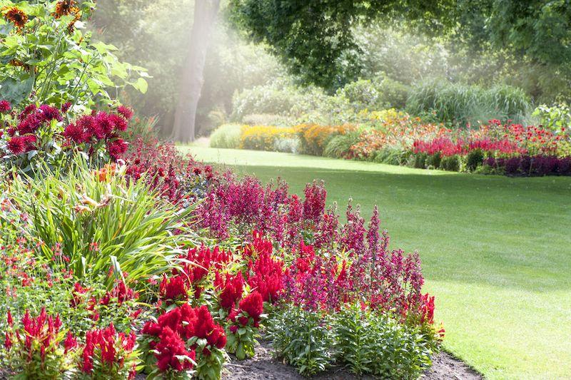 colorful border garden summer pollinator friendly