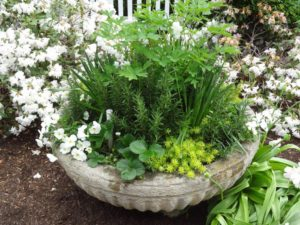 captured-garden-container-garden-herb-1