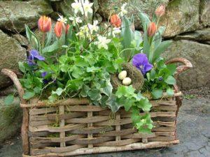 container garden herbs